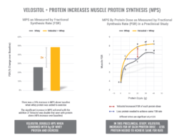 Velositol Muscleproteinsynthesis 2 Uai Nutrition21